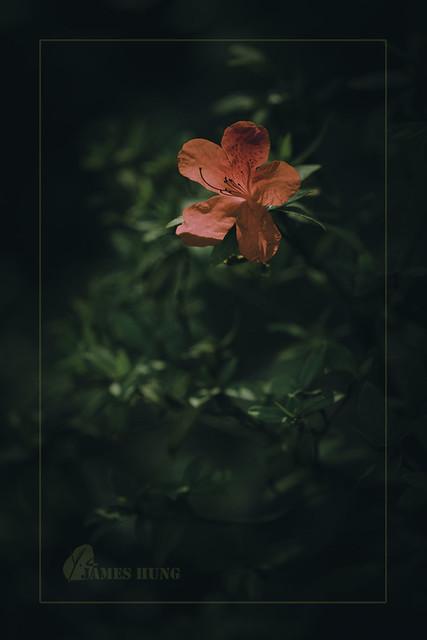 禪是一枝花, Zen is a flower