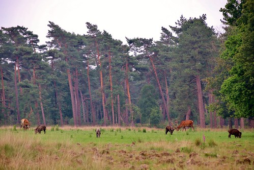 Hoge Veluwe Nationalpark, Netherlands
