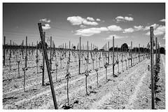 Klimaaussichten für den Breisgau