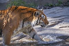 Irina walking in the water