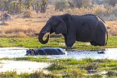 Delta Okavango NG19, Botswana