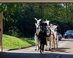 City of London Cemetery horse drawn hearse 1
