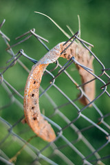 Focused rusty horseshoe on a fence with blurry background