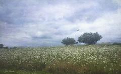 Wildflowers at White Rock Lake