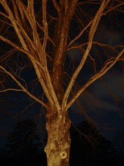 Tree at McIntire Park