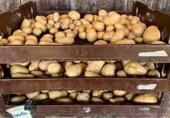 Corolla Potatoes