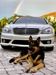 Family / Pack / Dogs - (Chapter 8 - German (Shepherd), To The Manner Born, To The Manor Borne, By German (Engineering)) - IMRAN™
