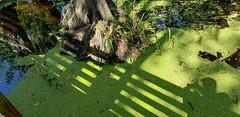 Lettuce Lake Park