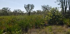 Golden Aster Scrub Nature Preserve