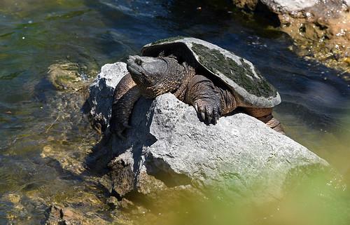 Big Boy on the Rocks