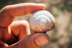 Close-up picture of a man's hand holding a snail shell