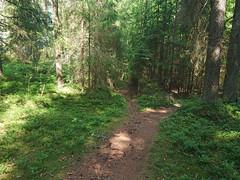 Flyt og over steiner, Romsåsen, Askim,Indre Østfold, Viken, Norway