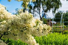 In the garden (Slottsträdgården)