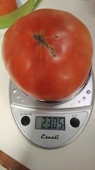 Super Fantastic tomato III