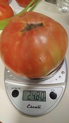 Super Fantastic Tomato IV