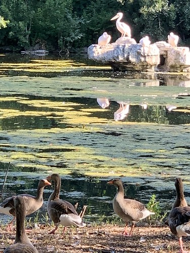 The birds of St James's Park