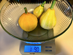 Home Garden Harvest Lemon Squash