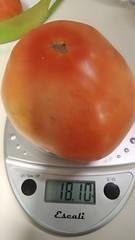 Super Fantastic tomato I