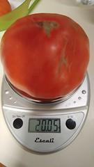 Super Fantastic tomato II