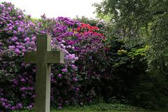 City of London Cemetery - flowering shrubs 06