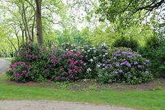 City of London Cemetery - flowering shrubs 05