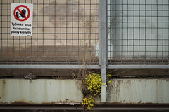 No entry for plants