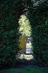 City of London Cemetery Yew hedge arch 2