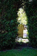 City of London Cemetery Yew hedge arch 1