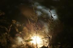 Last light of the night