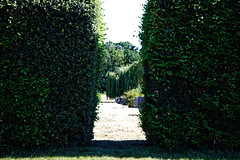 City of London Cemetery hedge on Limes Avenue 2