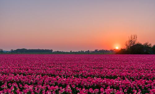 World of Pink.