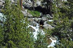 Tributary stream of Dana Fork (Yosemite National Park, California, USA) 1