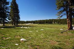 Tuolumne Meadows (Yosemite National Park, Sierra Nevada Mountains, California, USA) 4
