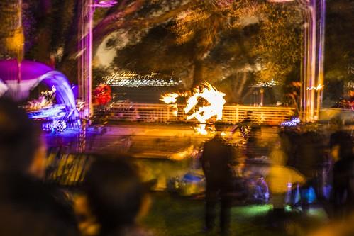 Glow _festival Devonport 6681