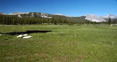 Tuolumne Meadows (Yosemite National Park, Sierra Nevada Mountains, California, USA) 1