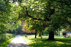 24.6.20 Fog Lane Park 05
