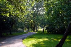 24.6.20 Fog Lane Park 11