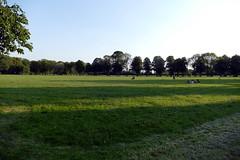 24.6.20 Platt Fields Park 3