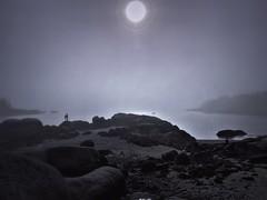 Maine Fog, June 2020
