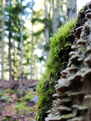 Moss and fungi on tree stump