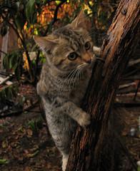 vertical Cat