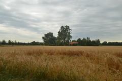 Zicht op veld bij Gramsbergen (136FJAKA_3941)
