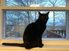 Martha in window