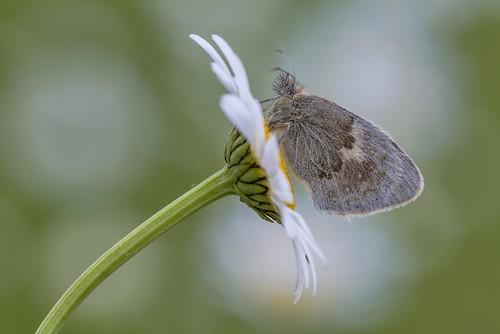 *Time of butterflies* - *Zeit der Schmetterlinge*