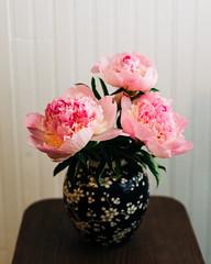 pink flower still life
