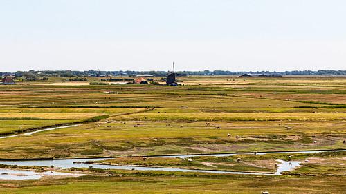 Schapen bij Groet - Noord-Holland - Nederland.