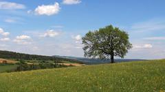Offene Landschaften im Hegau