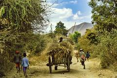 Rural Roads, Madagascar