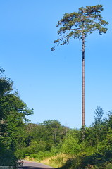 Forêt de Retz - Photo of Puiseux-en-Retz