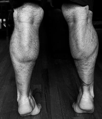 Black and white calves